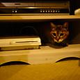 PS3であったまる猫