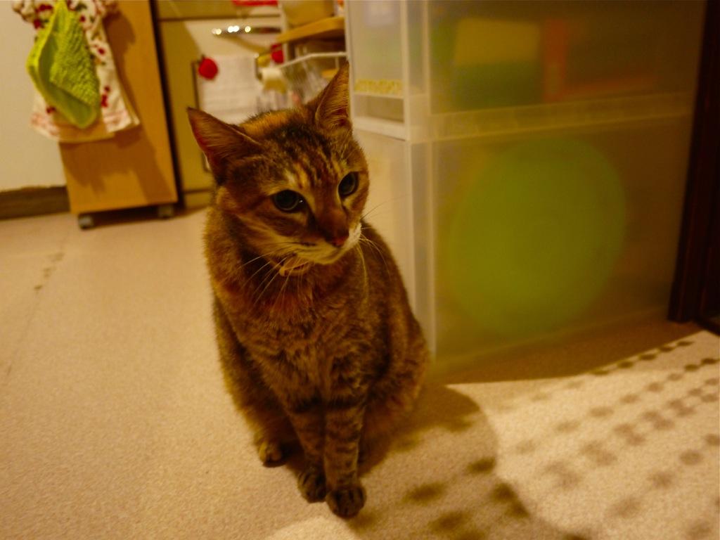 実家 猫 チユ